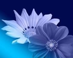 Purple Header Flowers_498x400px_Flipped