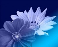 Purple Header Flowers_498x400px